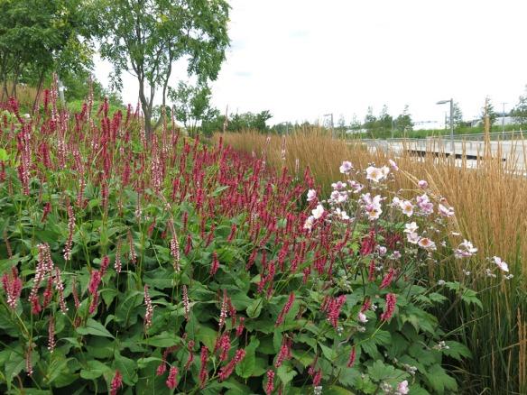 28 juli 15 Queen Elizabeth Olympic park Asien 1