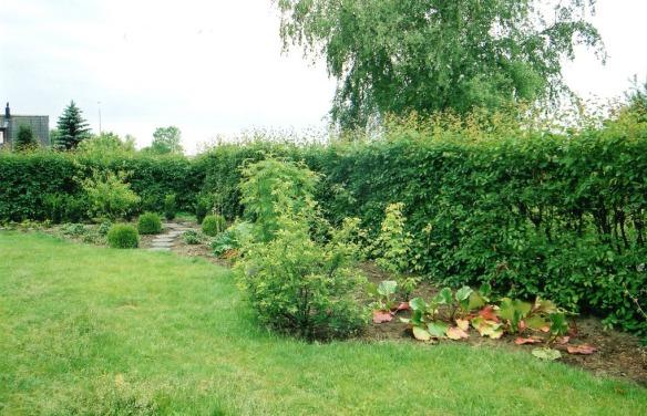 Trädhörnet 2004