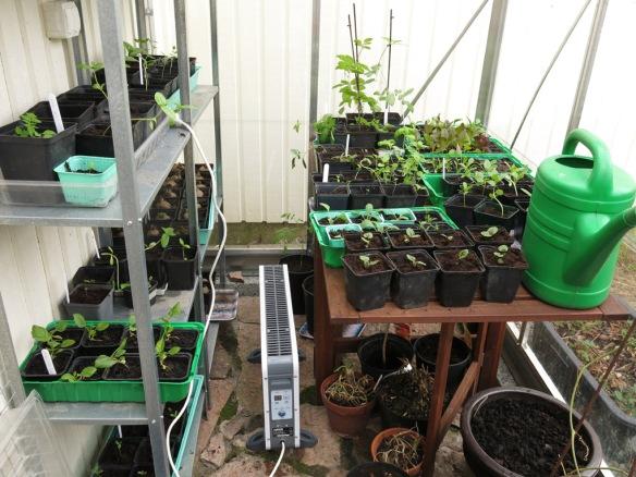 17 april 16 frösådder växthuset