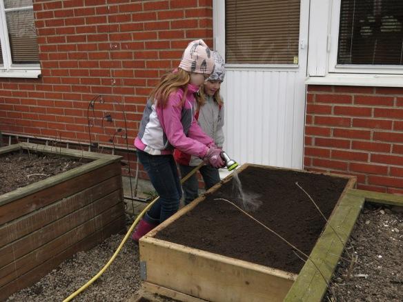 3 april 16 barnens grönsaksland 4