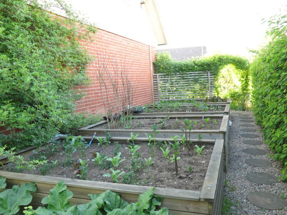 24 maj 16 trädgårdslandet grönsaker