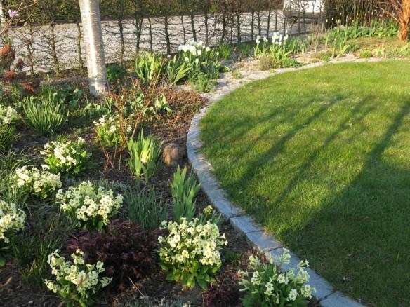 3 maj 16 stäpprabatt tulpaner vivor
