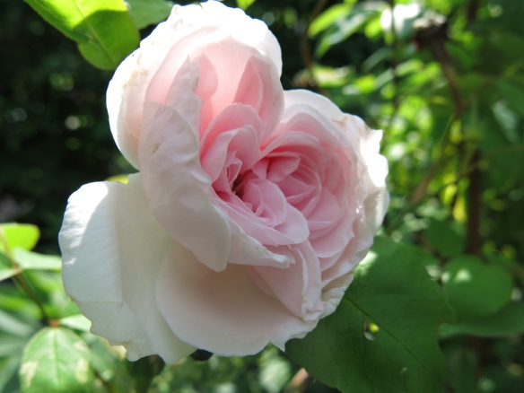 4 juni 16 ros Barabara austin
