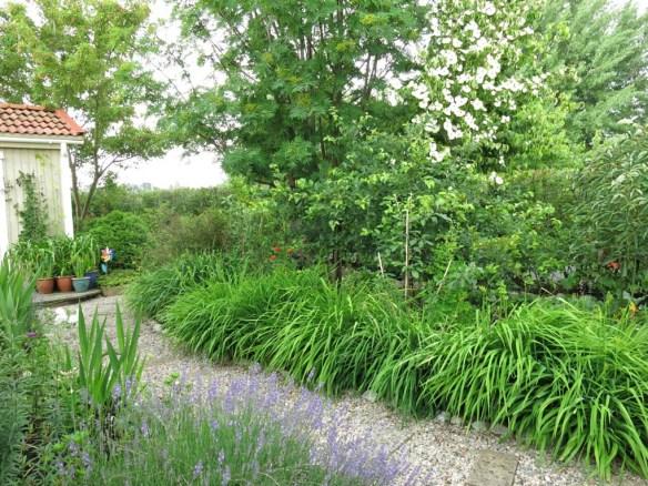 2 juli 16 dagliljor trädhörn dodong blomsterkornell
