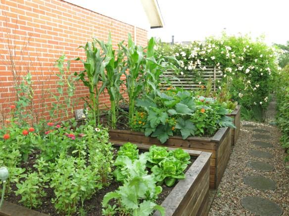 2 juli 16 trädgårdslandet upphöjda odlingslådor grönsaker