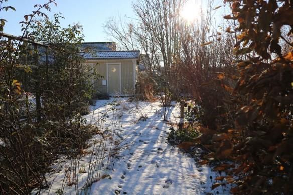 12-nov-16-frost-tradhornet