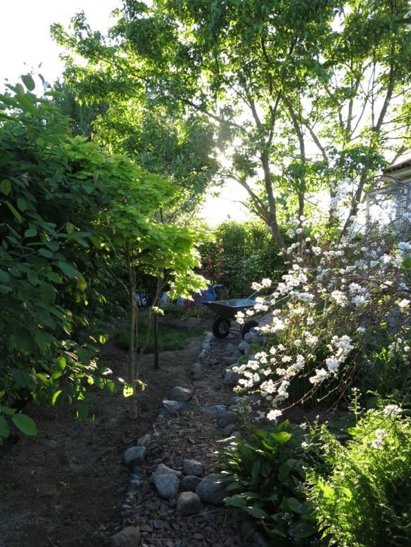 24-maj-16-tradhornet-dammen-ginnalalonn