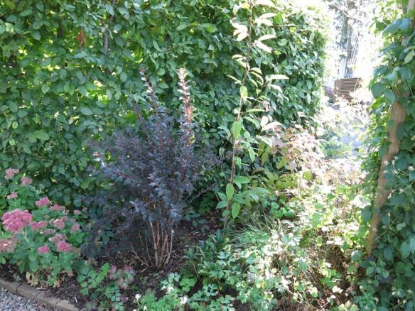 25-sep-16-ingangsrabatten-smallspirea-karleksort