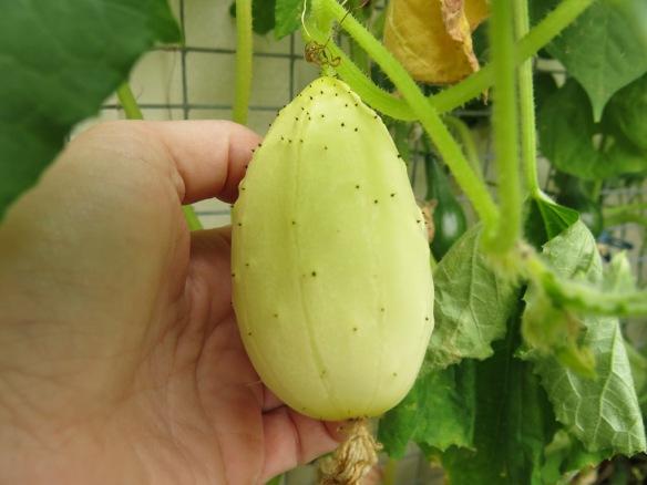 14-juli-16-gurka-miniature-white