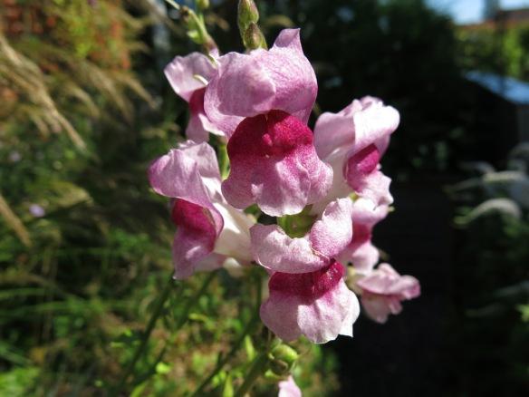 22-juli-16-lejongap-opus-plum-blossom