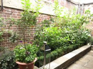 3-aug-15-roof-garden-tudor-3