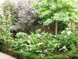 3-aug-15-roof-garden-tudor-5