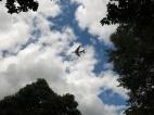 30-juli-15-kew-flygplan