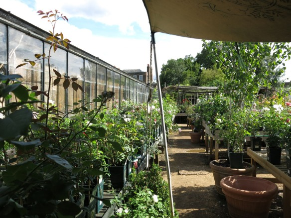 6-aug-15-petersham-nurseries-4