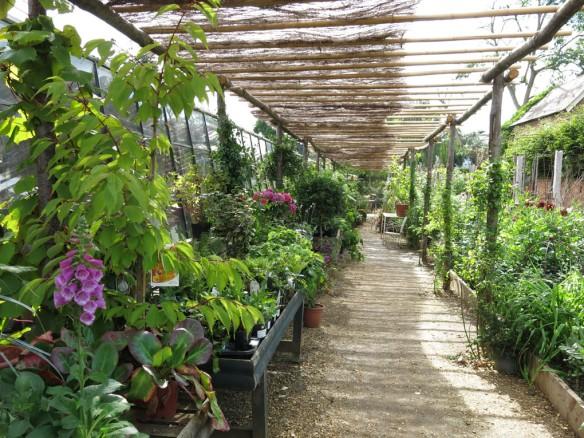 6-aug-15-petersham-nurseries-5