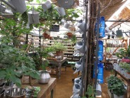 6-aug-15-petersham-nurseries-7
