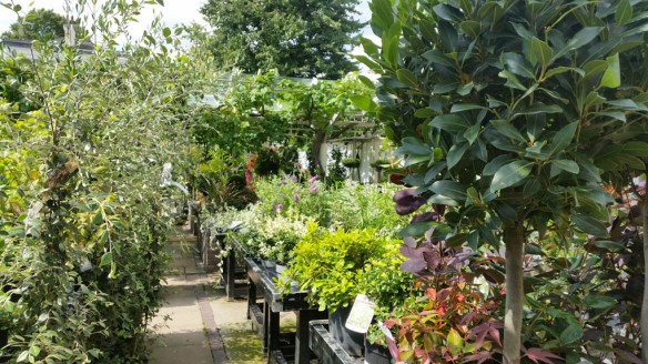 7-aug-15-clifton-nurseries-2