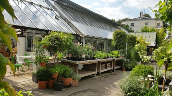 7-aug-15-clifton-nurseries-5