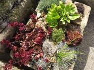 30 juli 15 Kew rock garden 6
