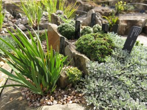 30 juli 15 Kew rock garden 7