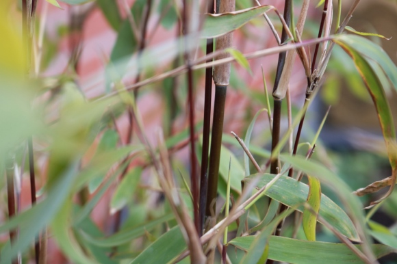 27 april 17 ingången glasfiberkrukor svart bambu