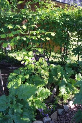 14 juni komposthörnan lunden 1