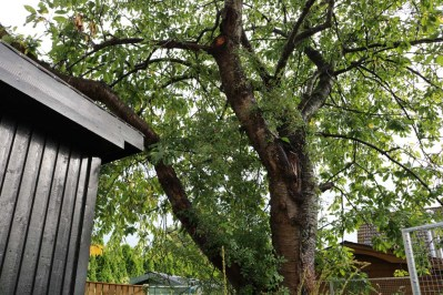 20 sep 17 komposthörnan fågelhus lunden 1