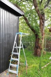 20 sep 17 komposthörnan fågelhus lunden 3
