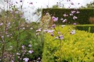 juli 17 le jardin plume 6