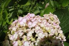 8 aug 17 puy du fou blomsterdalen 16
