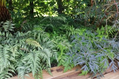 1 aug 17 Le jardin des ombres et du repos 5