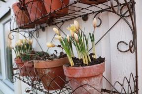 3 mars 19 krukhyllan trädgårdsboden 2