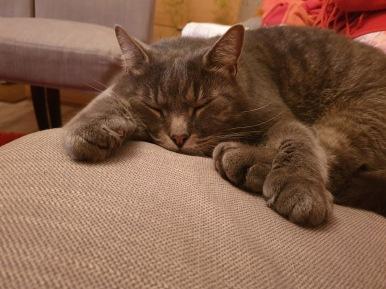 16 okt 19 katt 2